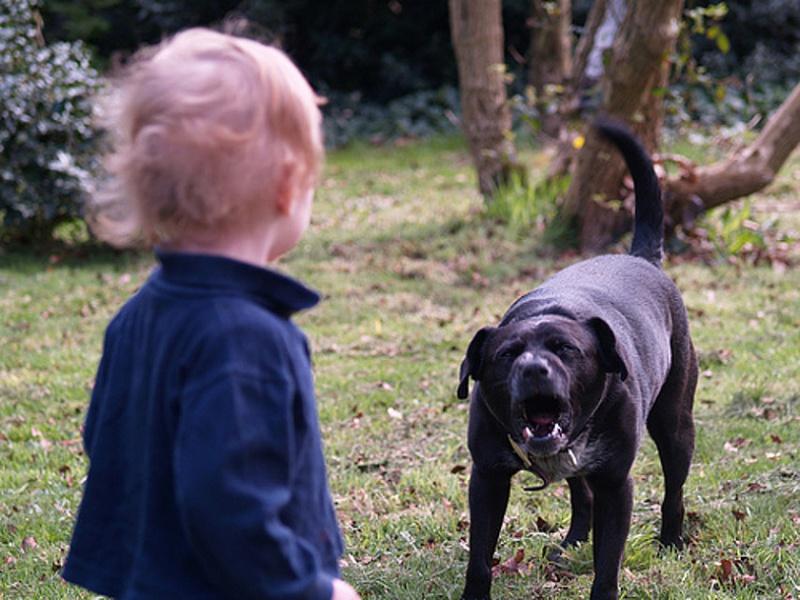 Картинки по запросу безопасность с животными для родителей дошкольников